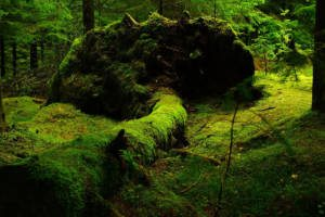 Ośrodek wypoczynkowy Kaszuby